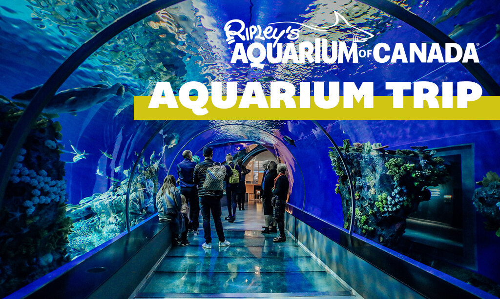 Eye Opening Trip to Ripley's Aquarium of Canada